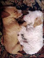 Snuggle Buds by LivMyersPhoto
