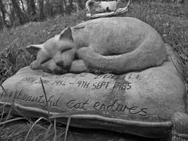 The beautiful cat endures.. by liverecs