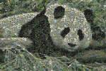 C-Commons Photomosaic Panda 2
