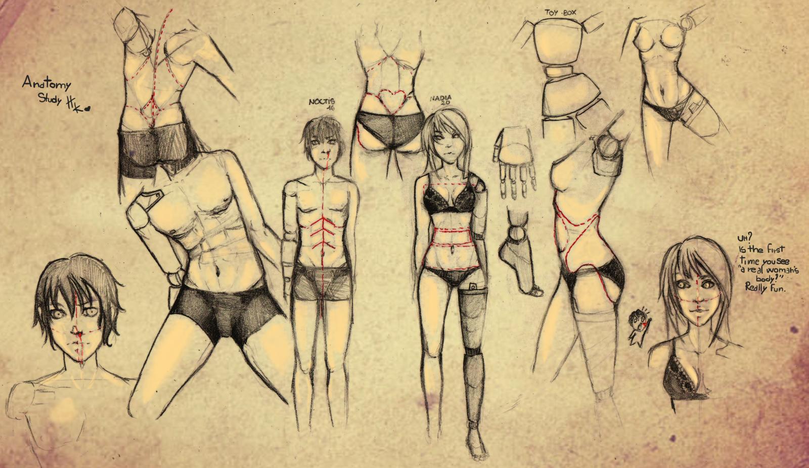 Anatomy study by HaitiKage on DeviantArt
