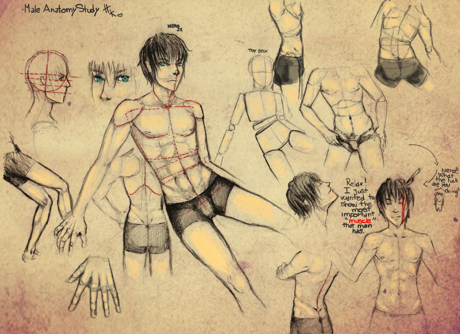 Male anatomy study by HaitiKage on DeviantArt