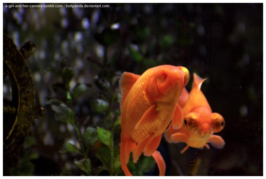 two_fish__three_eyes_by_buttpanda-d5eg3xq.jpg