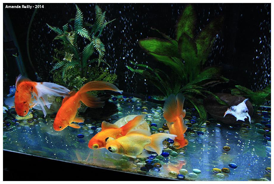 school_of_fish_by_themandabear-d73wpwg.j