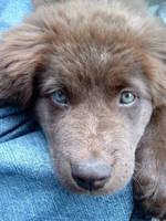 Pretty eyes by wildgraywolf