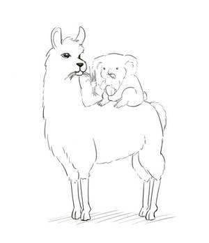Koala Llama Sketch