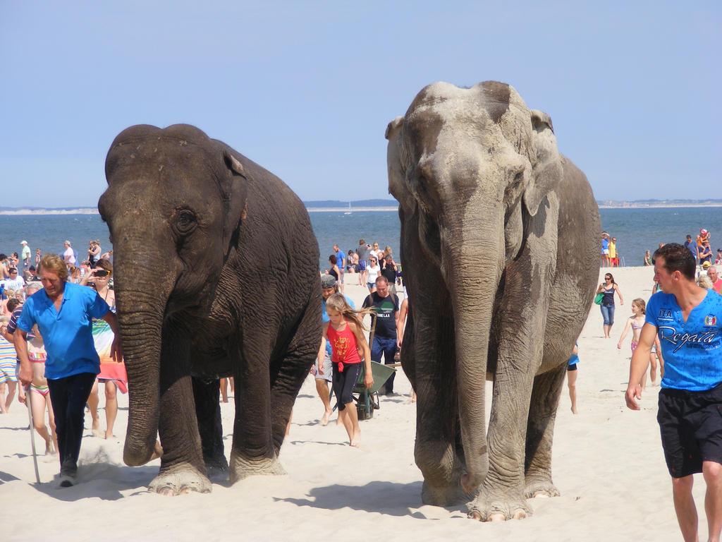 Elephants 24 by BonaCas