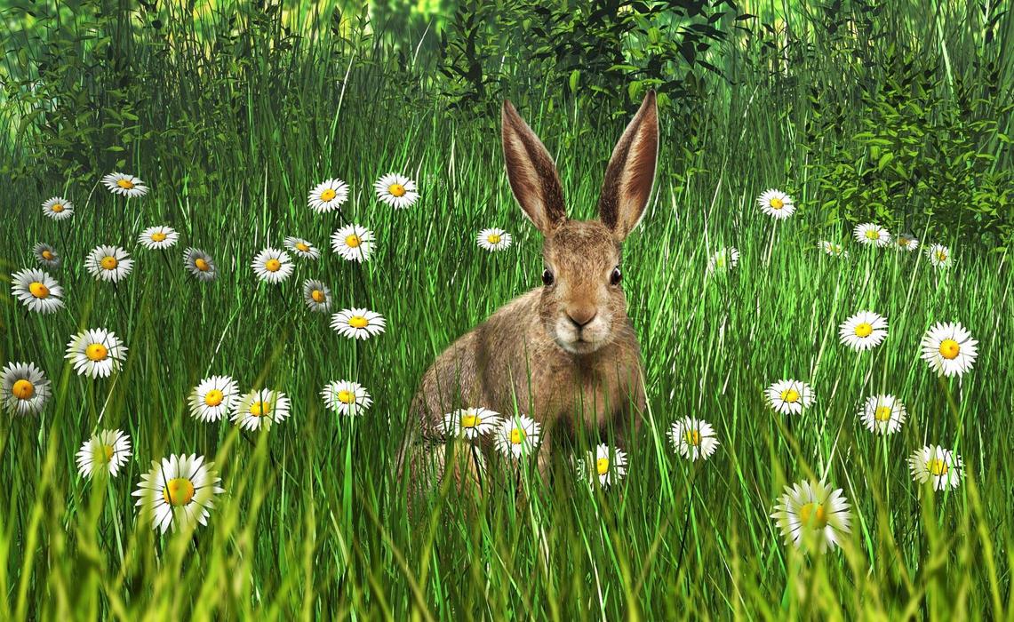 Rabbit by xmas-kitty