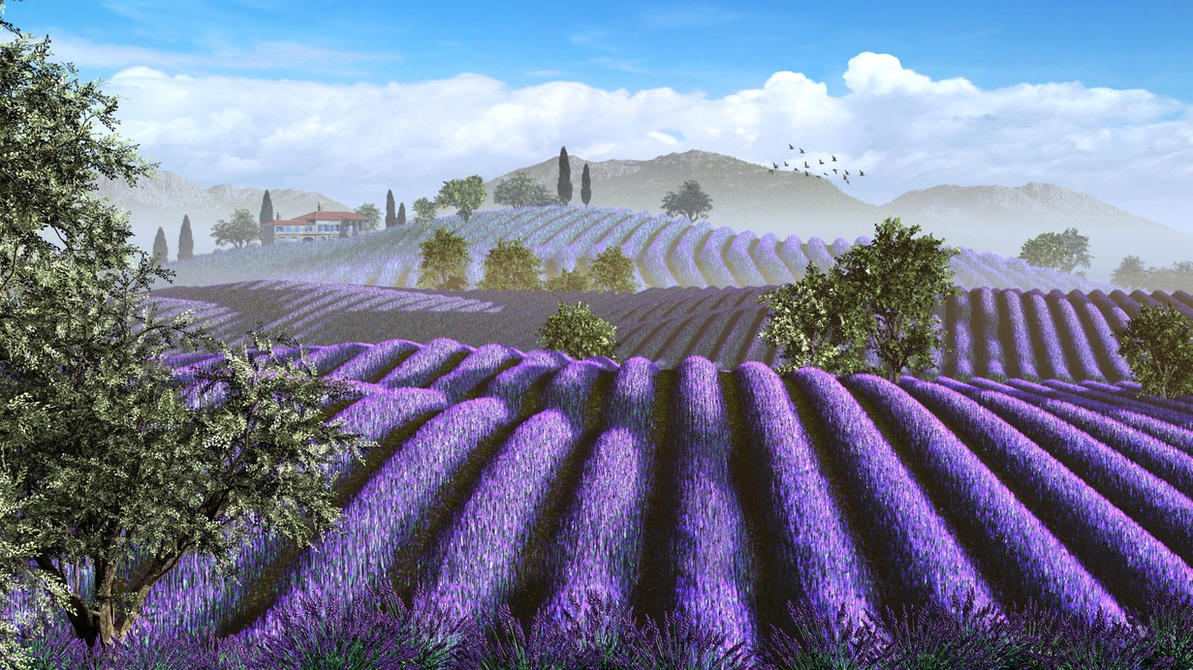 Lavender Fields by xmas-kitty