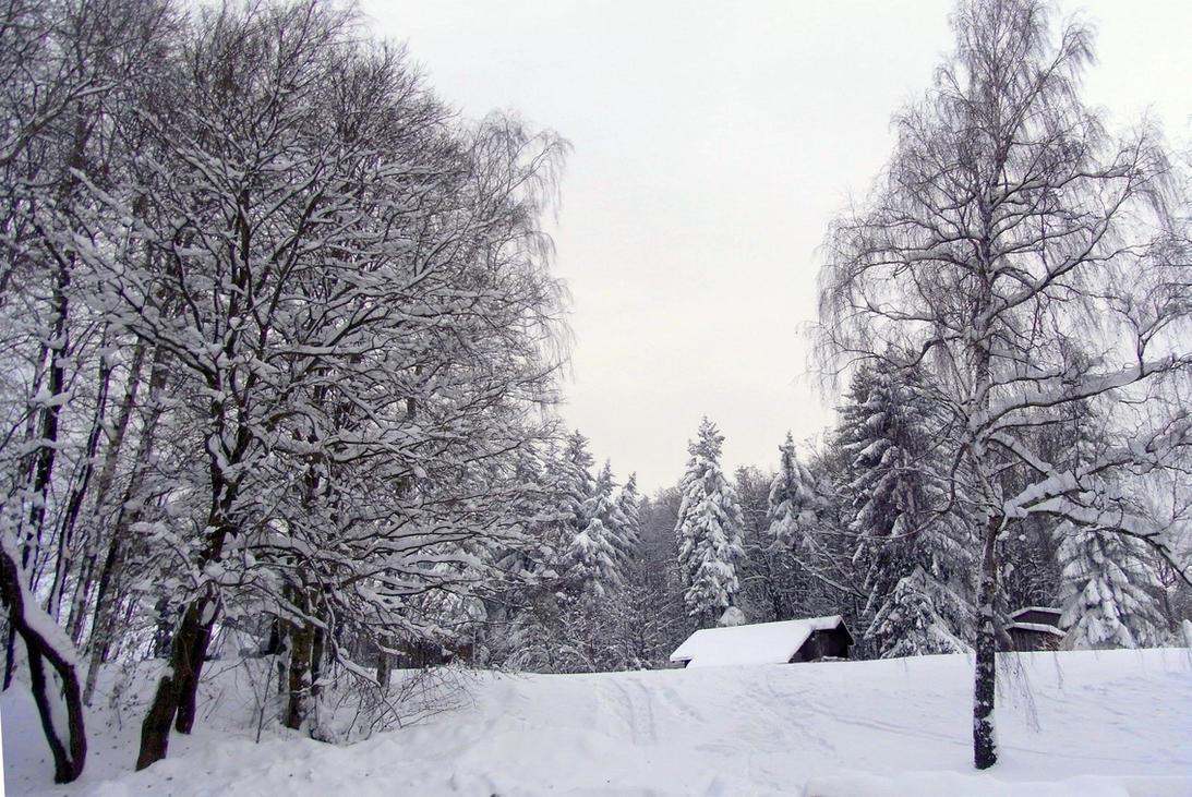 Snow by xmas-kitty