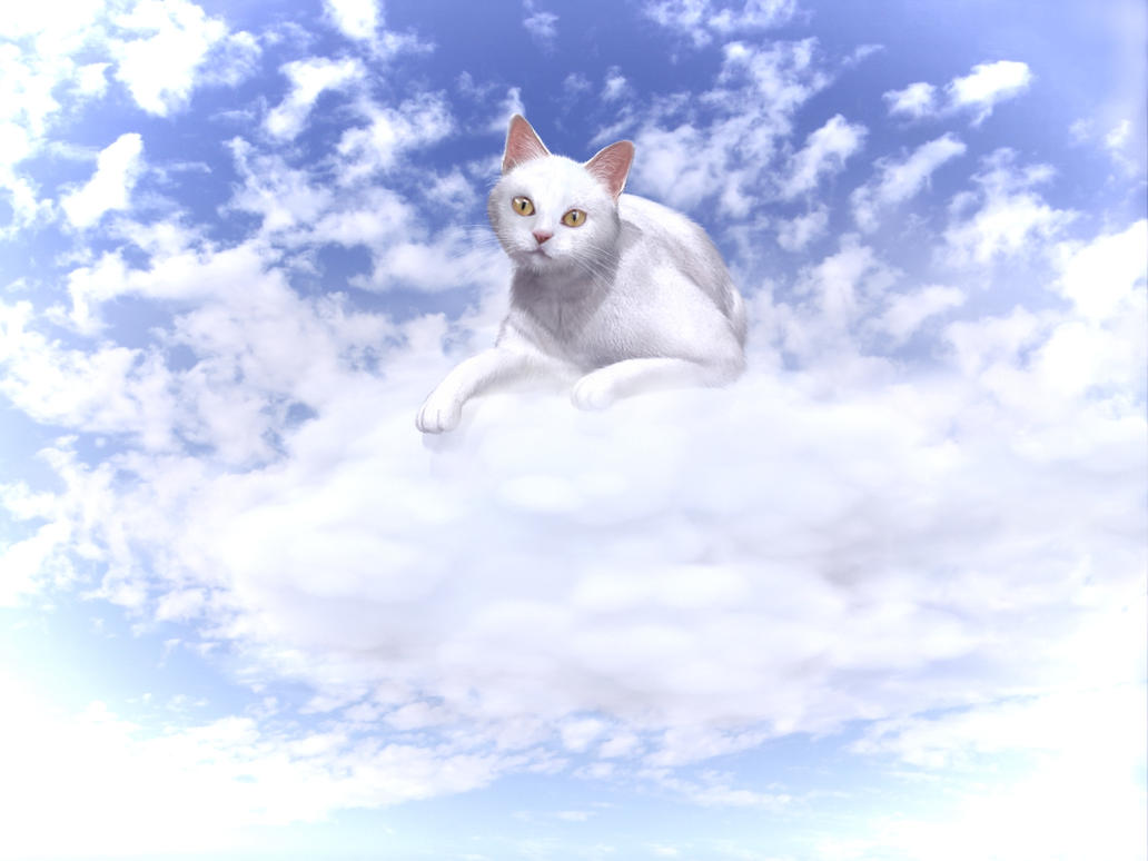 Cotton on a Cloud by xmas-kitty