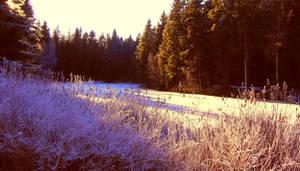 Midwinter Sunlight