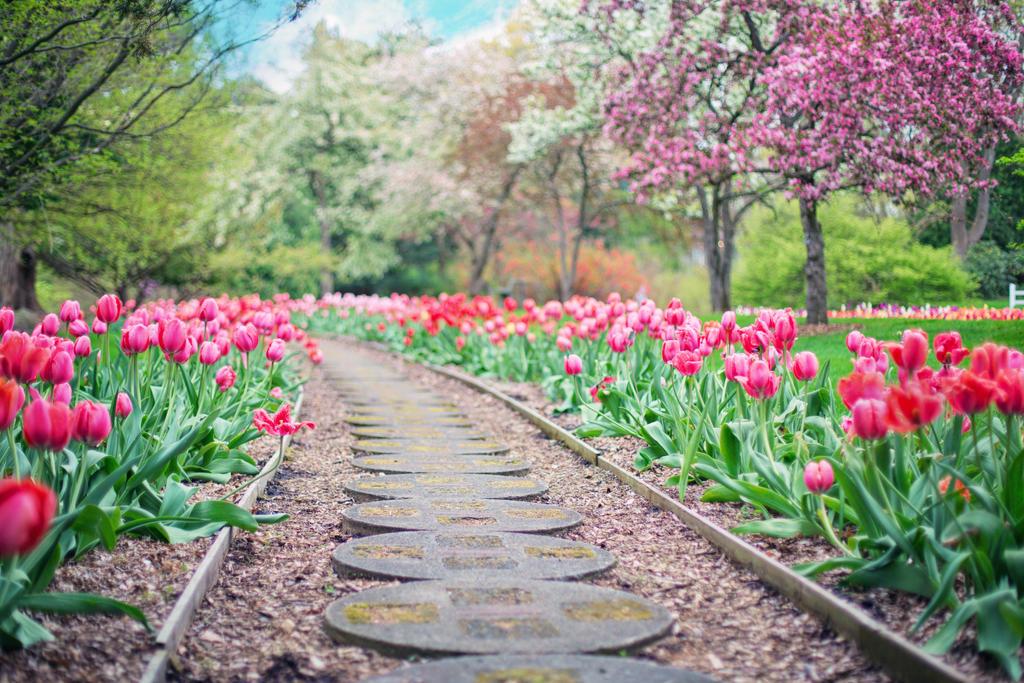 Beautiful-bloom-blooming-414160 by Rose-Em