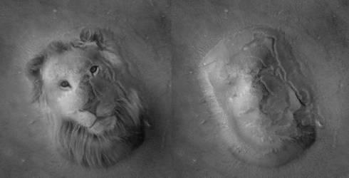 Lion on Mars by mapgie