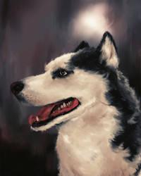 good boy husky by clc1997