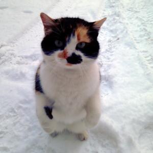 Ariel-Sun's Profile Picture