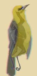 Warbler by Anceylee-Star