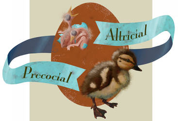 Altricial And Precocial by Anceylee-Star
