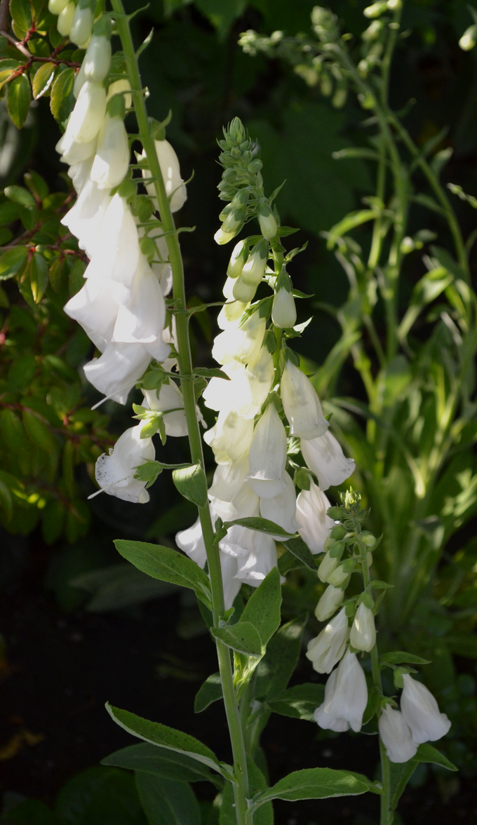White Flowers San Fran by BachLynn23