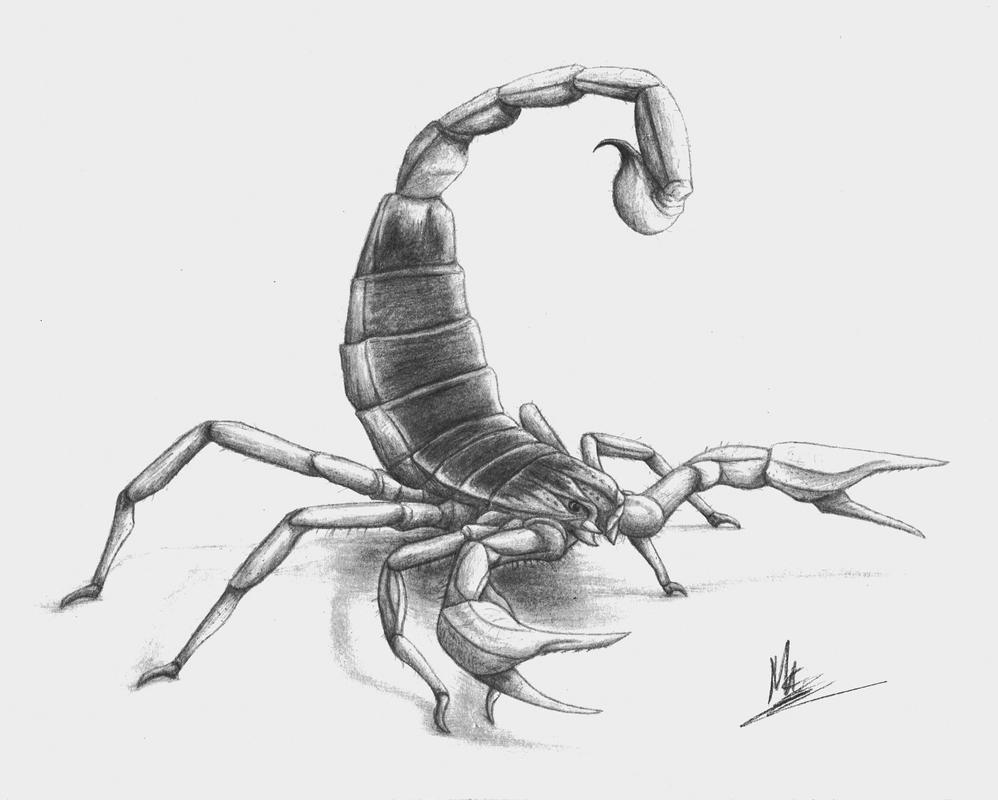 Scorpion by Giganotosaur on DeviantArt