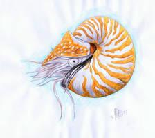 Nautilus by Giganotosaur