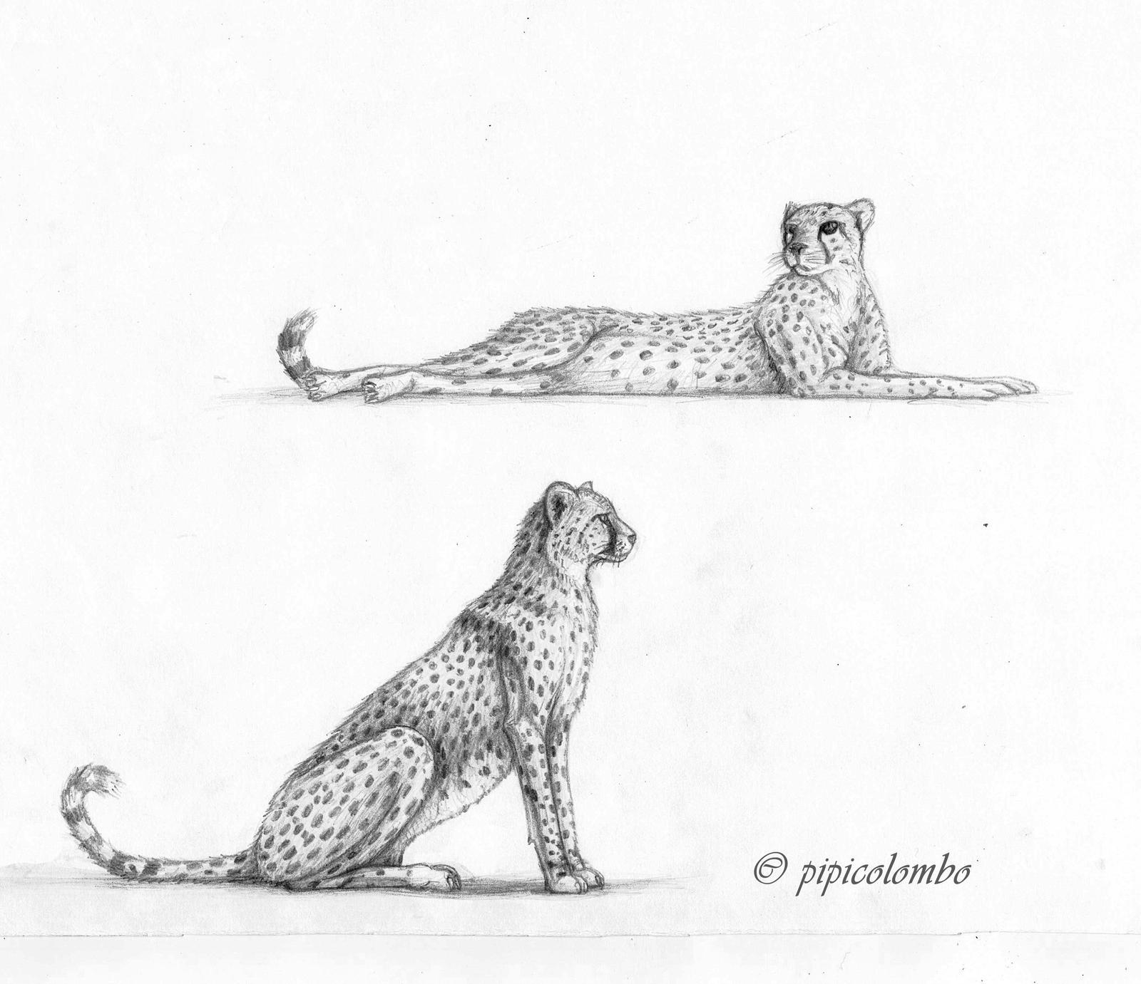 Cheetah sketches by Giganotosaur on DeviantArt
