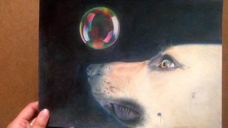 Dog vs. Bubble by InvinciChicken