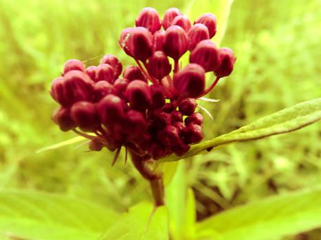 BerryFlowers