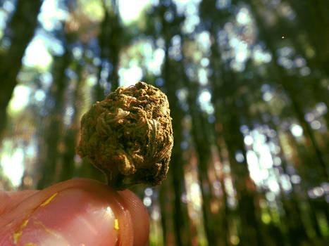 Ah, The Weed