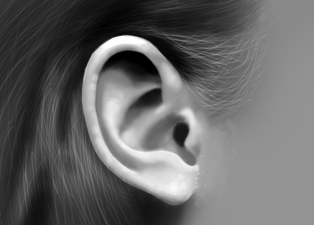 EarStudy by loafkill