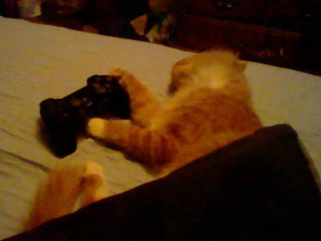 Gamer cat is sleepy
