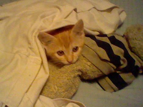 My kitten Rory
