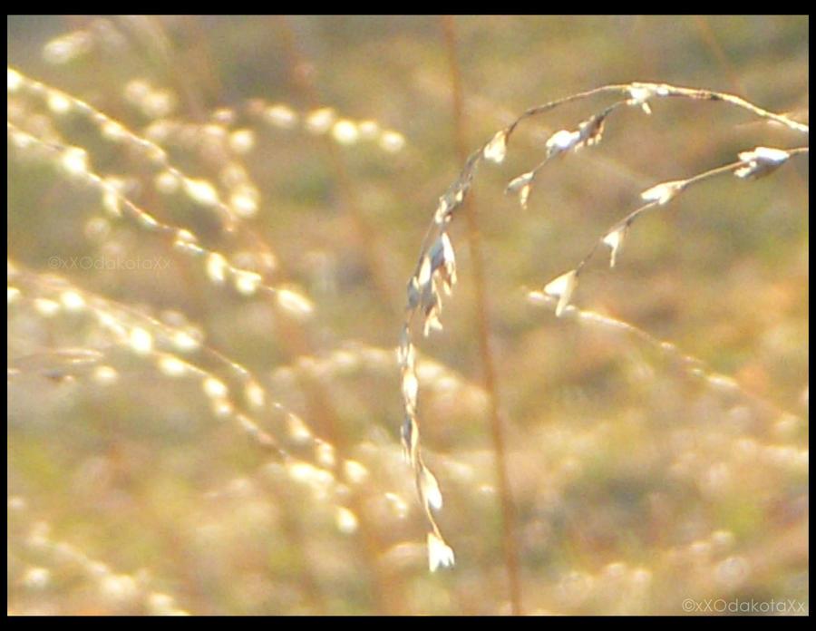 .:Summer Dust.2:. by xXOdakotaXx