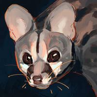 <b>Genet Cat</b><br><i>Singarl</i>