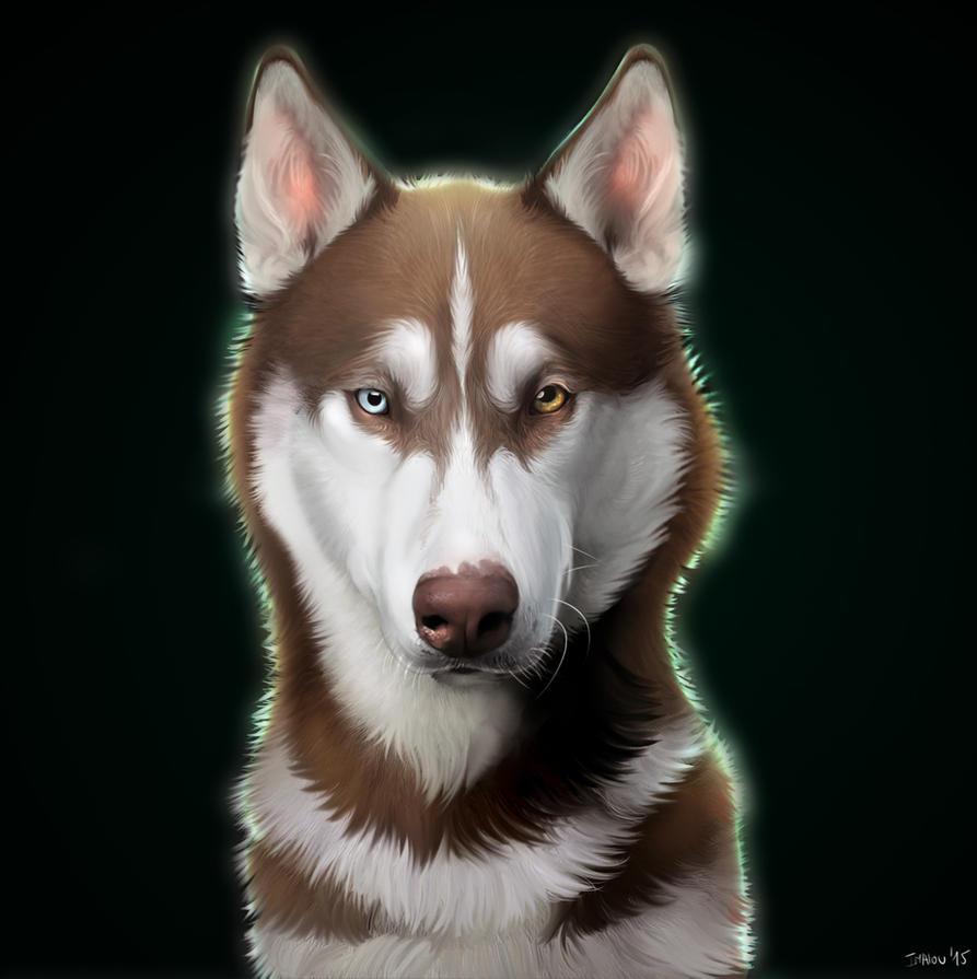 Husky by Imalou