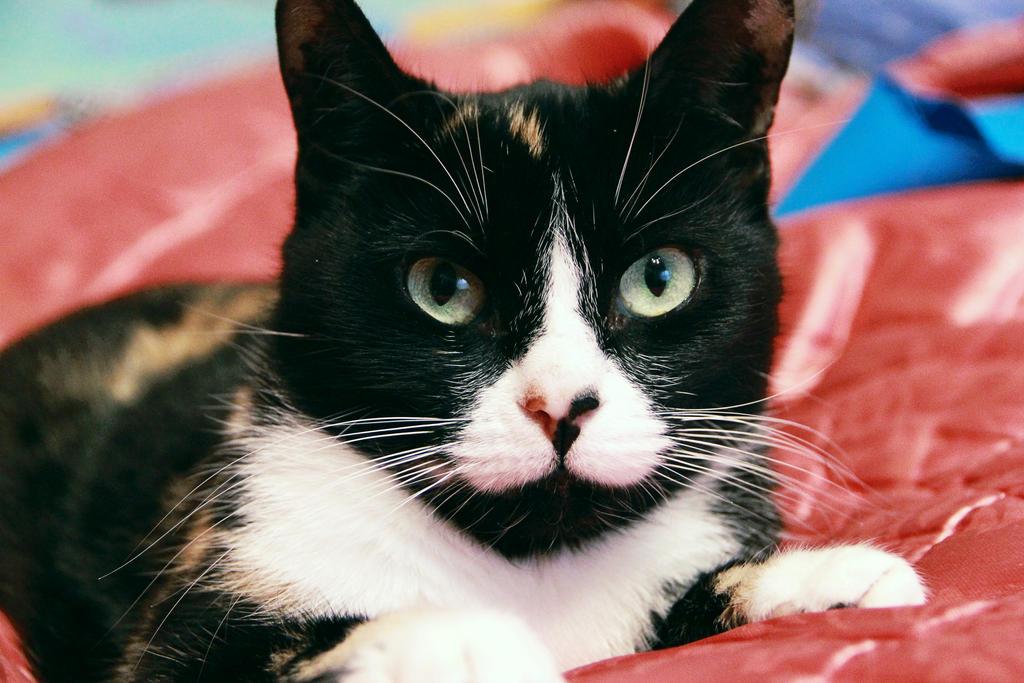 lady-cat by Zaira555