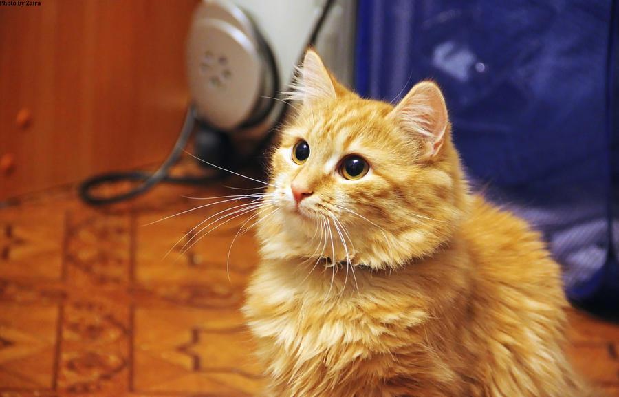 cute cat by Zaira555