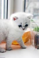 time for a kitten by Zaira555