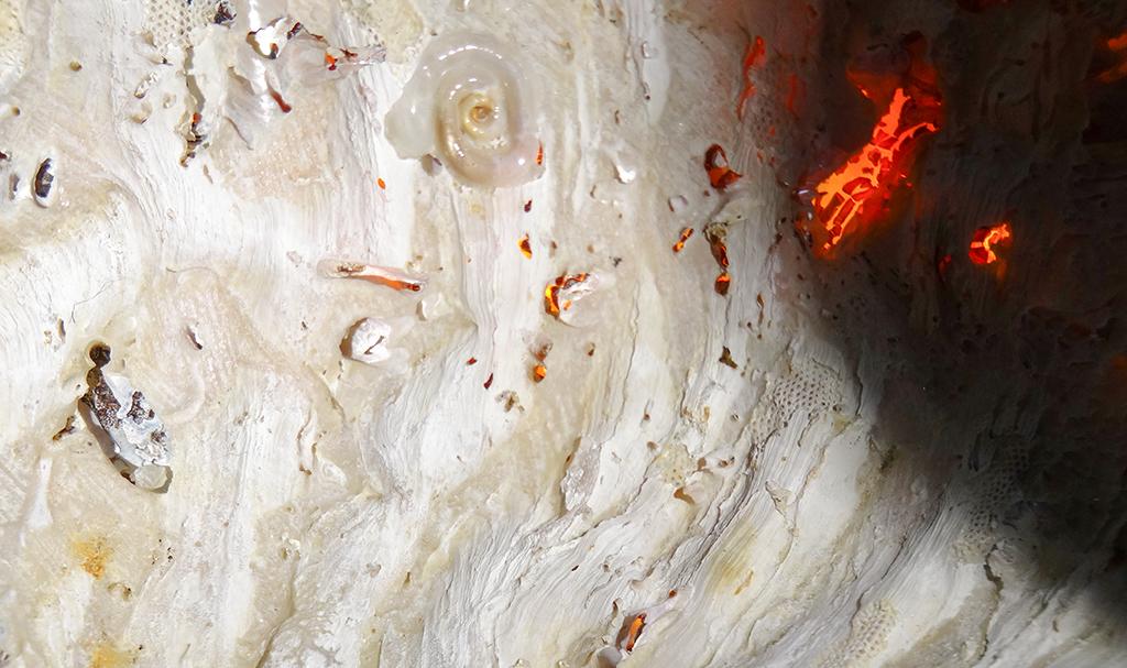 Flaming seashell 2 by RichardGeorgeDavis