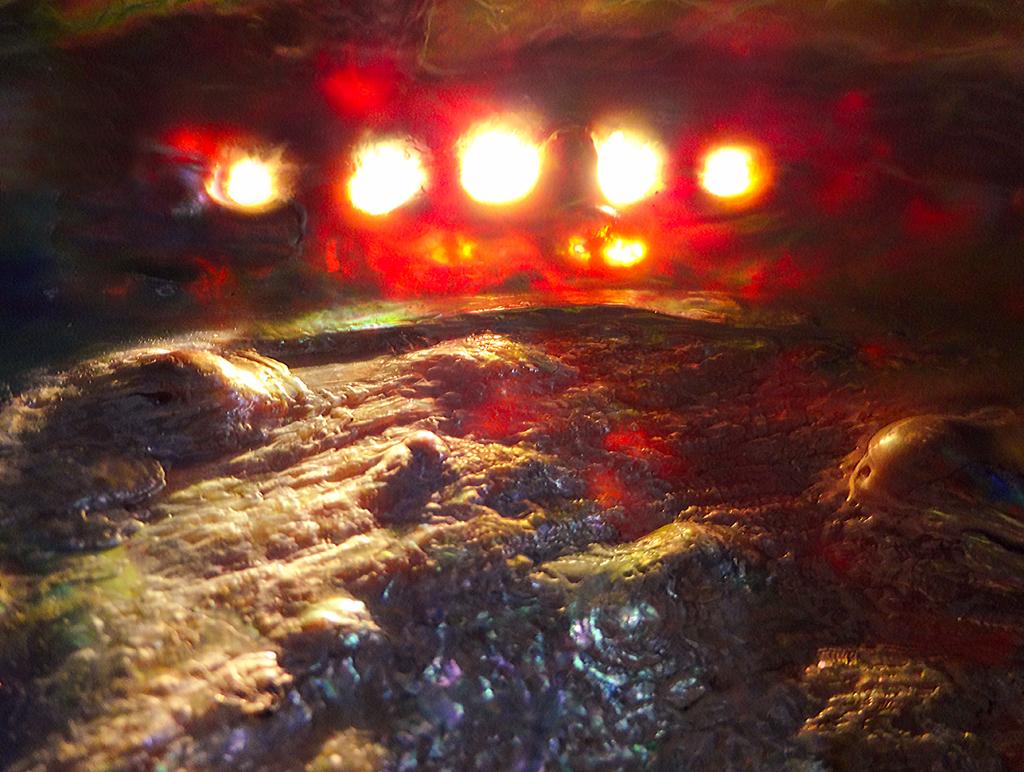 Flaming Seashell DSC00907 web by RichardGeorgeDavis