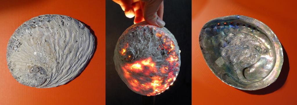 Flaming Seashell PROCESS-web by RichardGeorgeDavis