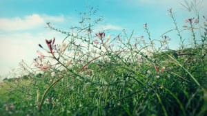 Field Wild Flowers by RGDart
