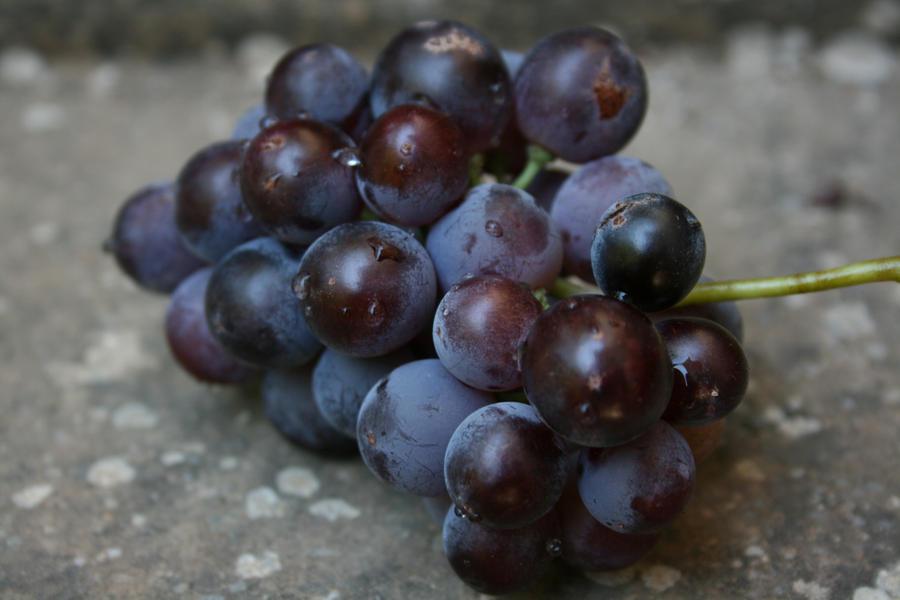 Grape 3 by Reaktionmann