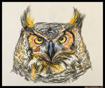 Owl by NikSebastian