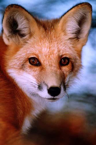 windfox's Profile Picture