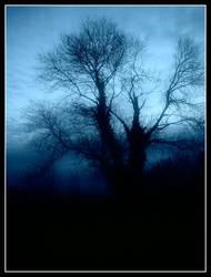 evening mist by swampy