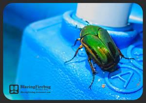 Lil June Bug