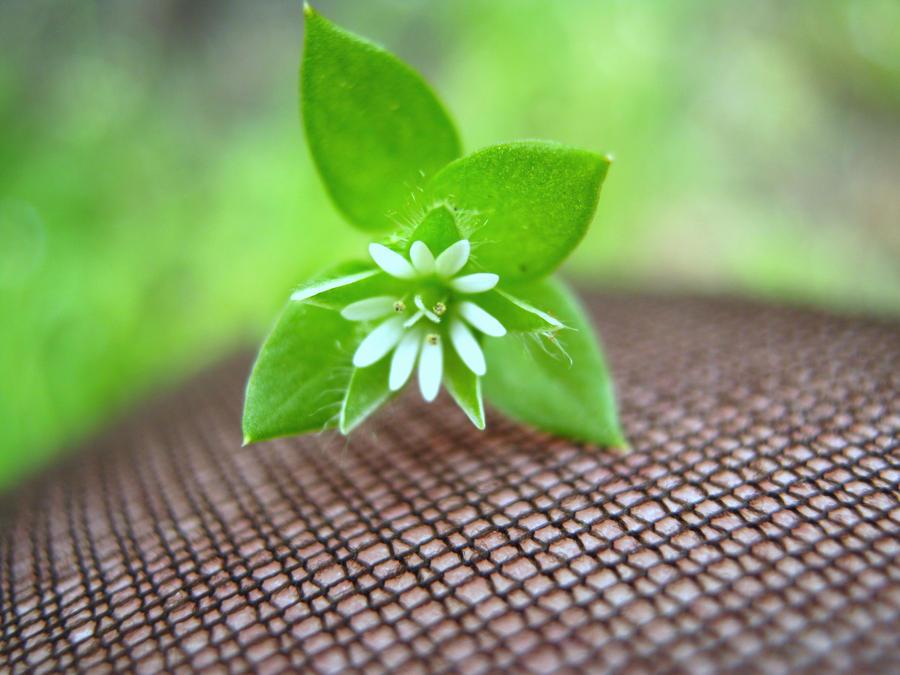 The Smallest Flower by GERARDwayFORlife