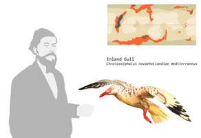 Inland Gull by PLASTOSPLEEN
