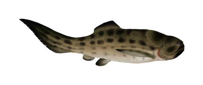 TTDPC 4: Favourite Devonian Animal