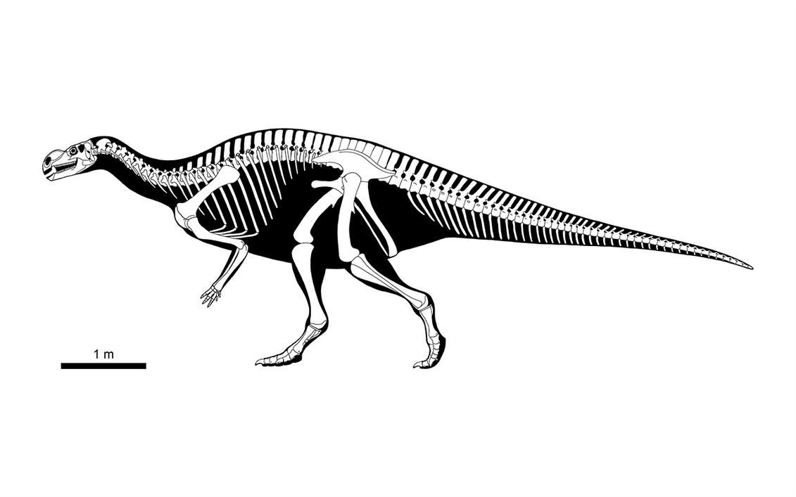 Muttaburrasaurus langdoni Skeletal, 2018 Version by PLASTOSPLEEN